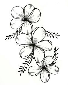Beautiful Ink Flower Drawing - Drawing Flowers Mandala In Ink Flower Art Drawing Beautiful 25 Beautiful Flower Drawing Information Ideas Tattoos Flower Drawing Beautiful Flower Draw. Easy Flower Drawings, Beautiful Flower Drawings, Pencil Drawings Of Flowers, Flower Art Drawing, Flower Sketches, Floral Drawing, Plant Drawing, Easy Drawings, Drawing Drawing