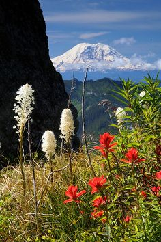 Flower Power - Mount Ranier, Washington