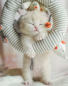 Sleeping Kitty ~ even hanging up!  #CoolCatTreeHouse