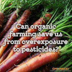 Despite their known toxicity, pesticides persist on farms all around the country, potentially affecting not only the consumer but anyone who works on the farm or lives nearby. Many of these persistent pesticides miss their targets while certified organic food does not use these chemicals in production ever. Learn more about organic food here:  http://www.foxnews.com/health/2014/03/27/can-organic-farming-save-us-from-overexposure-to-pesticides #organic #food #pesticides