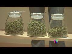 #newadsense20 El novedoso negocio del cultivo de marihuana autorizada…