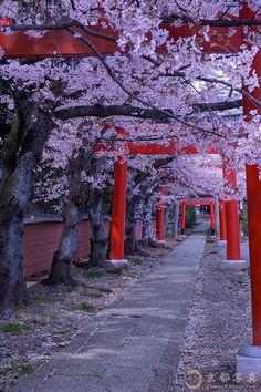 Tunnel of red torii gates | Haruka Suzuki