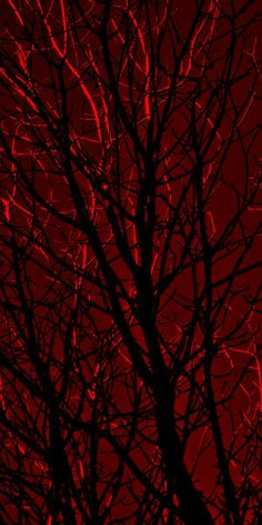 red sky with black tree The Rouge, I See Red, Estilo Rock, Simply Red, Aesthetic Colors, Burgundy Aesthetic, Red Riding Hood, Shades Of Red, Little Red