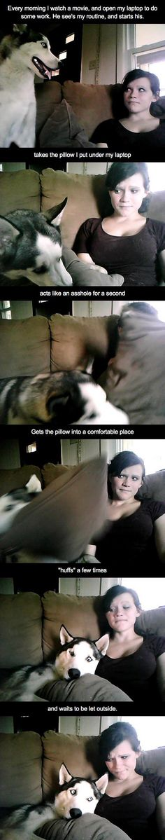 I have a wolf-hybrid This is his morning routine. - Funny Dog Quotes - This is his morning routine // funny pictures funny photos funny images funny pics funny quotes The post I have a wolf-hybrid This is his morning routine. appeared first on Gag Dad. Cute Funny Animals, Funny Cute, Funny Dogs, Hilarious, Funny Humor, Animal Pictures, Funny Pictures, Funny Images, Quotes Images