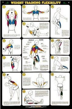 Healthy Tips Weight Training Flexibility Stretching Professional Fitness Wall Chart Poster - Fitnus Corp. Stretches For Flexibility, Flexibility Workout, Stretching Exercises, Golf Exercises, Post Workout Stretches, Stomach Exercises, Improve Flexibility, Training Exercises, Fitness Exercises