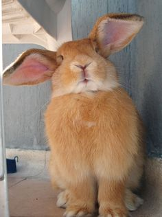 I am all ears
