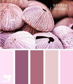 urchin color