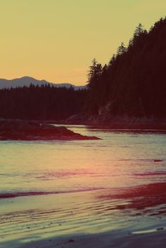 Places I've been: Tofino,BC. So lucky to call this our backyard Vancouver City, Vancouver Island, Best Places To Travel, Oh The Places You'll Go, Migrate To Canada, Tofino Bc, Dog Beach, We Are The World, British Columbia