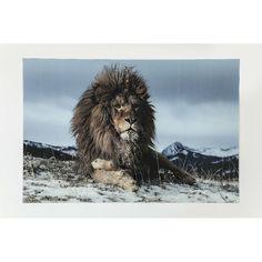 Πίνακας Glass Proud Lion 120x180 Μία πραγματικά εντυπωσιακή εικόνα ενός περήφανου λιονταριού ψηφιακή εκτύπωση πάνω σε γυαλί θα φέρει την άγρια φύση στο χώρο σας. Just For Men, Portrait, Lion Sculpture, Statue, Glass, Animals, Design, Art, Pictures