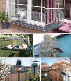 More catio ideas @Sarah Chintomby Chintomby Chintomby Taber