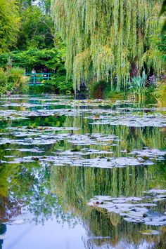 Claude Monet's garden, Giverny, France. Love it.... Our pond has the beginning of water lilies... http://KnollCrestGardens.com