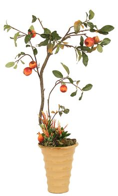 One Kings Lane - Autumnal Arrangements - Pomegranate Tree in Pot