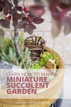 Creating+a+miniature+succulent+garden+is+so+simple!+Find+out+how+to+make+your+own!