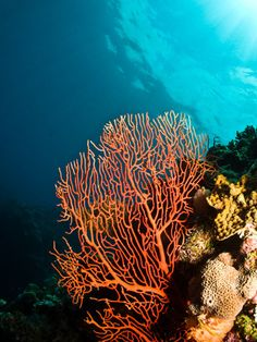 Colours of the reef by Tom Judkowiak on Flickr.