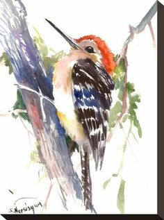 Red Headed Woodpecker Stretched Canvas Print by Suren Nersisyan at Art.com