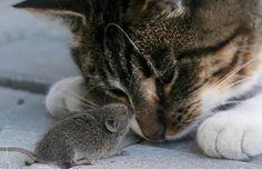 24 suloista kuvaa kissojen ja jyrsijöiden välisestä ystävyydestä | Vivas