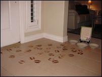 reindeer footprints