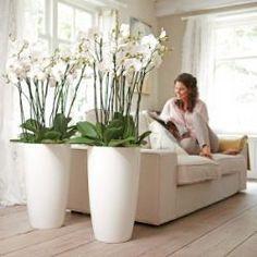 macetas de interior (indoor pots)