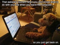 Amusing collection of all those funny awkward situation. The situations which provide us a deep rumbling laugh, every time brings a joyful crack to us. Awkward Animals, Funny Animals, Adorable Animals, Animals Dog, Funny Internet Memes, Funny Memes, Computer Humor, Done With Life, Dancing Baby