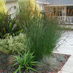 Seaside Garden Design, Pictures, Remodel, Decor and Ideas http://www.houzz.com/seaside-garden/ls=4