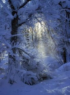 Would LOVE if it would snow like this here!!