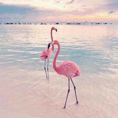 10 Gambar Flamingo Terbaik Lukisan Flamingo Latar Belakang Kertas Dinding