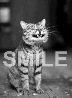 Cheshire Cat Smile