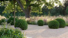 Gravel garden. Boxus, beautiful planting and old Horse Chestnut tree. Marcus Barnett.