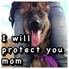 Sounds like my german shepherd..... But he's my best friend for life and will always be there for me!!!!!