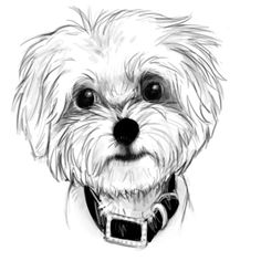Maltese portrait by here-kitty--kitty