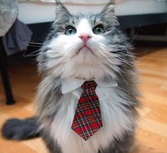 Who knew?  Add-ons for kitty collars, like ties!