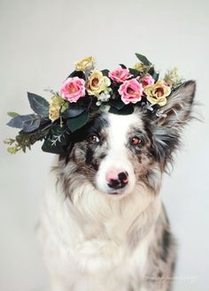 When unsolicited flower crowns happen to good dogs.