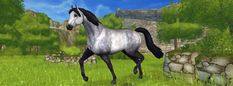 Curious Connemaras Came on star stable on Dec 6 2017 . Star Stable Horses, Horse Star, Dog Hot Spots, Drawing Stars, Horse Games, Pregnant Dog, Connemara, Horses For Sale, Horse Breeds