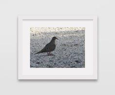 INSTANT DIGITAL DOWNLOAD  Dove Bird Printable by CleopatrasPearls