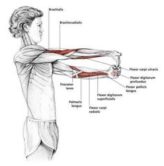 Fingers Down Forearm Stretch - Common Shoulder Stretching Exercises | FrozenShoulder.com