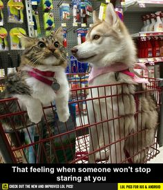 That feeling when someone won't stop staring at you funny pics, funny gifs, funny videos, funny memes, funny jokes. LOL Pics app is for iOS, Android, iPhone, iPod, iPad, Tablet