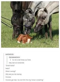 Stuffed baby horse with concerned horses looking on. So cute! Stuffed baby horse with concerned horses looking on. So cute! Funny Animal Memes, Cute Funny Animals, Funny Animal Pictures, Funny Cute, Funny Memes, Hilarious, Videos Funny, Funny Pics, Funny Stuff