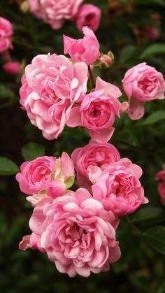 Very beautiful blooms