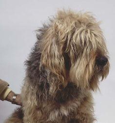... Dog Breeds Otterhound Page Funny 1 Dog Breeds Otterhound Page Funny 2