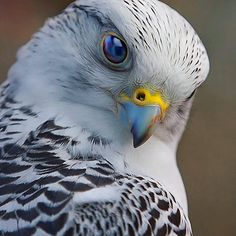 Falcon - Photography by © Scott McDaniel Tag a friend below 👇😍 #BabyAnimalPix