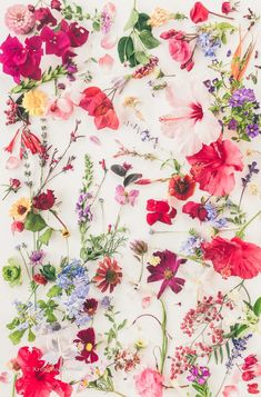 Botanical Art Photography by Kriss MacDonald - Wild About Here