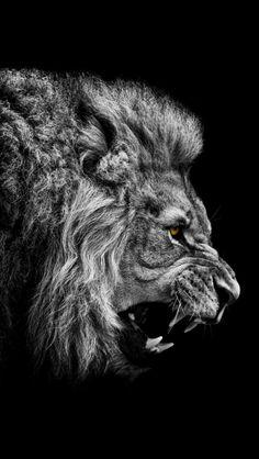 cuando el León ruge la tierra tiembla