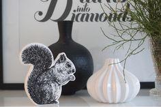 Orava ja varvut
