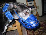 Greyhound Kennel Muzzle (Standard Basket)
