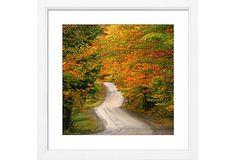 Autumnal Road on OneKingsLane.com