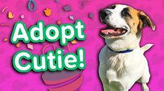 Adopt Cutie! // Shepherd Mix // Adoptable Featurette… #funnypetvideos #funnyanimals