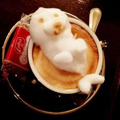 Kazuki Yamamoto is a Japanese barkeeper, serving cappuccino and other delights… Fresh Coffee, I Love Coffee, Coffee Break, My Coffee, Funny Coffee, Coffee Time, Coffee Shop, Cappuccino Art, Cappuccino Machine