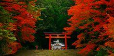 紅葉に色づいた霧島神宮 Kirishima shrine,Kagoshima,Japan