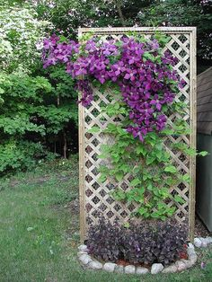 Outdoor Decor Ideas With Clematis. Clematis plants are known as plants that love their feet in the shade and their faces in the sun. Read more: www. Diy Garden, Plants, Garden Trellis, Shade Garden, Backyard Landscaping Designs, Clematis Trellis, Outdoor Gardens, Container Gardening Flowers, Backyard