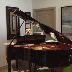 Romeo et Juliette_Ramos Piano, Mario, Music Instruments, Bouquets, Reading, Musical Instruments, Pianos